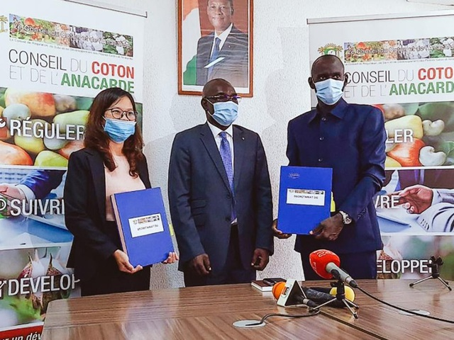 T&T Group continues to purchase 150,000 tons of raw cashew nuts from Ivory Coast in 2020